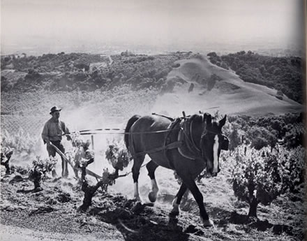 Ansel  Adams - Springtime Plowing, Paul Masson Vineyards (Horse & Plow)