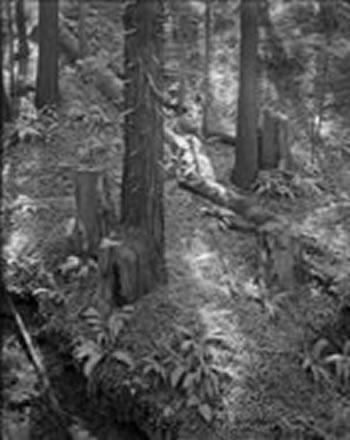 Alan  Ross - Redwood Grove, Big Sur, California