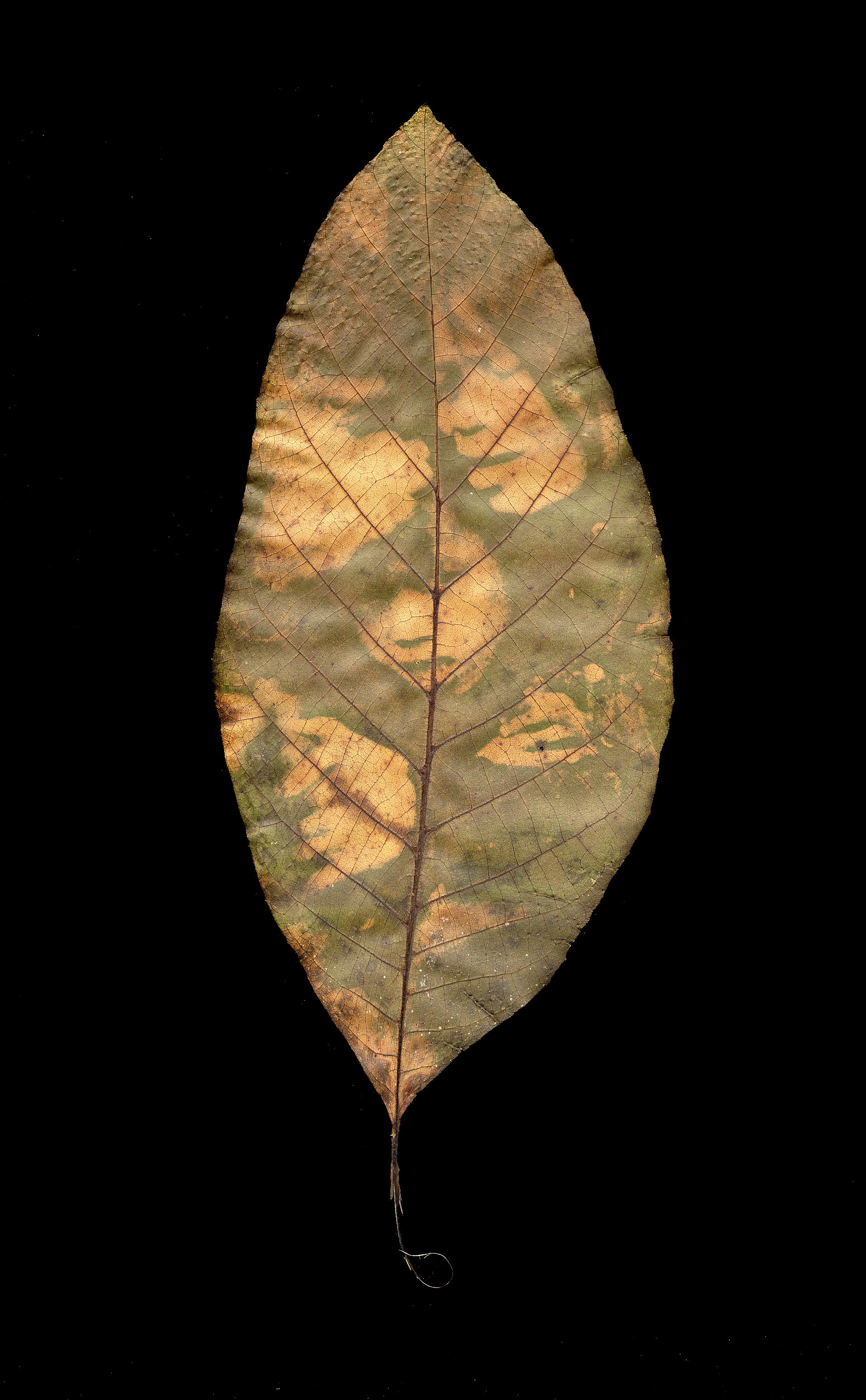 Binh Danh - Ambush In The Leaf #3