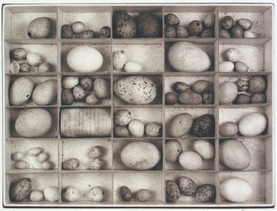 Joseph McDonald - Untitled (Eggs in box) platinum