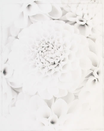 Ron van Dongen - WOW36X Dahlia Everest